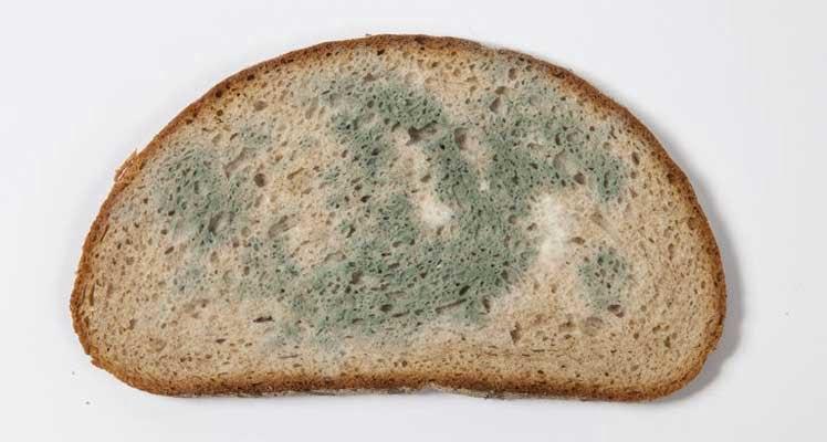 Bild zeigt schimmliges Brot