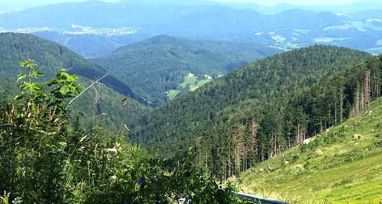 Bild zeigt Wald