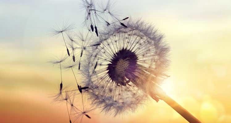 Bild zeigt Pollen