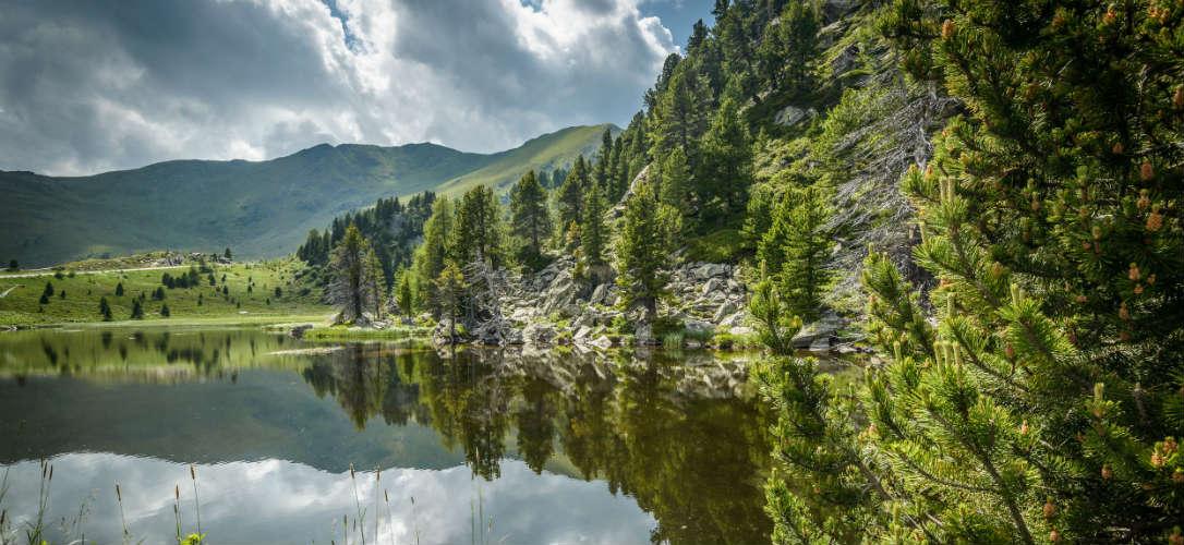 Bild zeigt Zirbenwald Nockberge